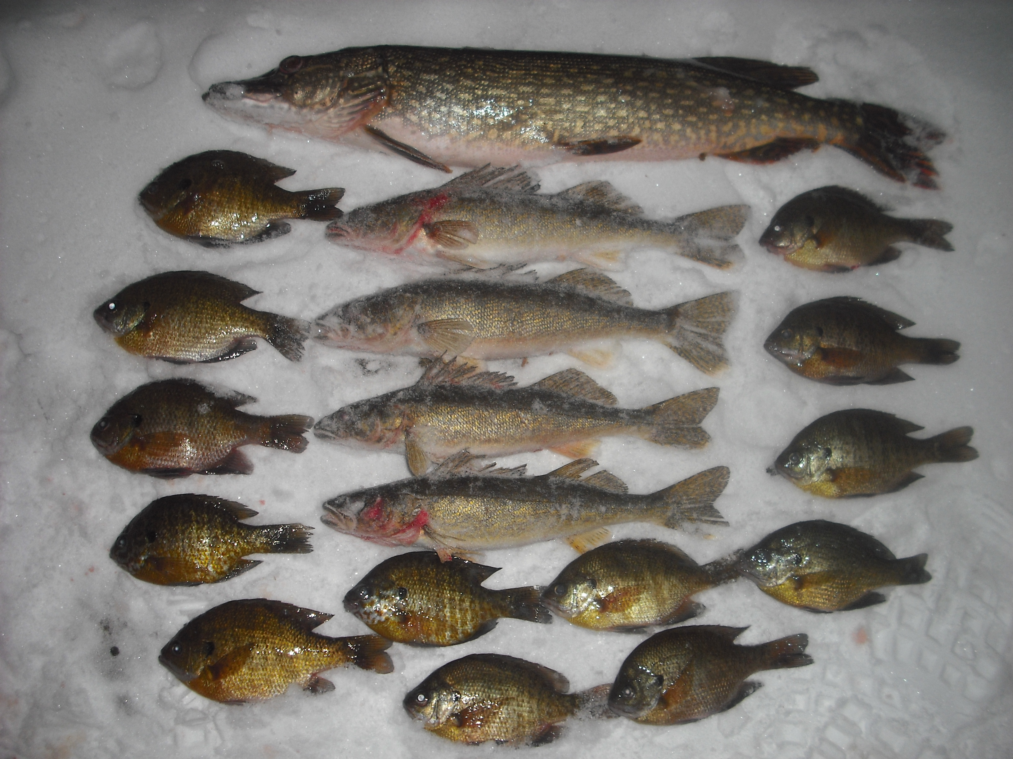 Wisconsin ice fishing guide in minocqua walleyes pike and for Wisconsin fishing license price